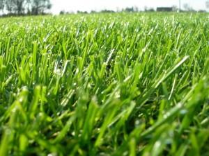 Nasz Trawnik